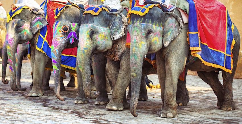 Risultati immagini per india elefanti