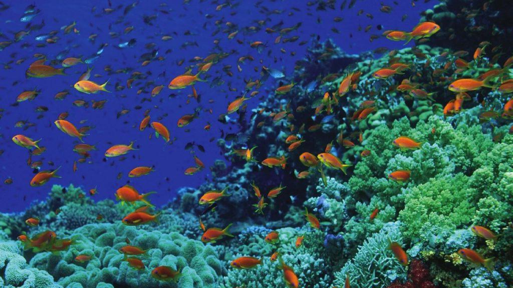 sharm-snorkeling