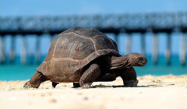 zanzibar-isola-delle-tartarughe