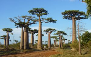 Madagascar: un'isola incantevole