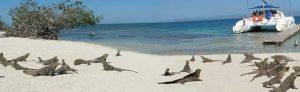 iguana-playa