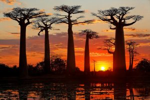 Diario di un viaggio in Madagascar