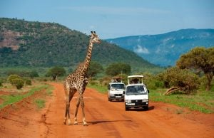 tsavo-east-national-park-015_orig