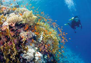 diving_marsa_alam_g_