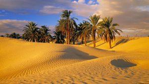 """Un """"gruppo di amici"""" in Tunisia"""